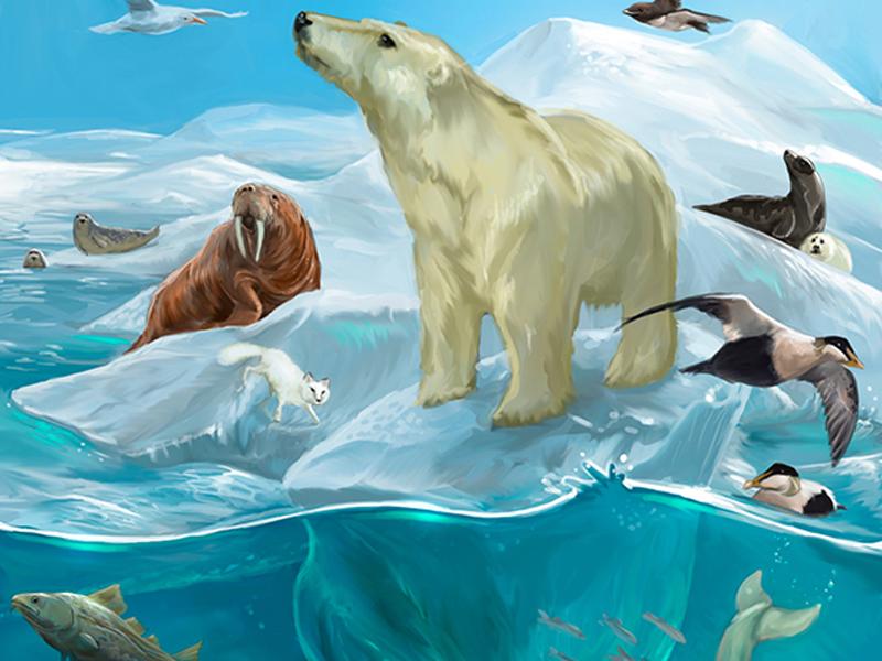 Digitaalinen kuvitus aiheena arktinen eläimistö ja eläimet kuten jääkarhu.